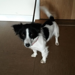 Found dog on 30 Jan 2015 in Wicklow. Found Rathdrum, Co Wicklow.  Contact Wicklow Dog Pound for information on 040444873