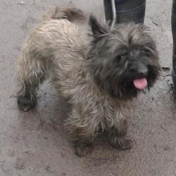Found dog on 13 Feb 2015 in clondalkin. found now in the dublin dog pound... Date Found: Thursday, February 12, 2015 Location Found: Castle Grange Est , Clondalkin