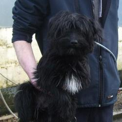 Found dog on 06 Mar 2015 in tallaght. found terrier, now in the dublin dog pound.. Date Found: