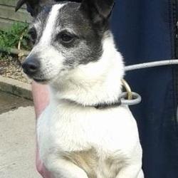 Found dog on 27 Mar 2015 in clondalkin village. found terrier,now in the dublin dog pound... Date Found: Thursday, March 26, 2015 Location Found: Village , Clondalkin