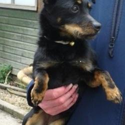 Found dog on 03 Apr 2015 in lucan village. found terrier pup, now in the dublin dog pound.... Date Found: Wednesday, April 1, 2015 Location Found: Village , Lucan