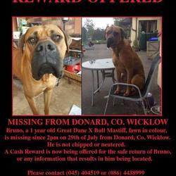 Lost dog on 29 Jul 2015 in Donard, Wicklow. Our dog went missing from our home in West Wicklow on 29\7\15, he is a one year old Great Dane x Bull Mastiff, he is a much loved and much missed family pet. A reward is offered for his return.