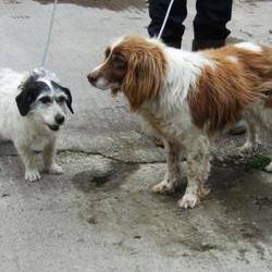 Dog looking for home 31 Jul 2015 in surrender_dublin pound. SURRENDERED...BOTH NEED A NEW HOME ASAP.Contact dublin dog pound..