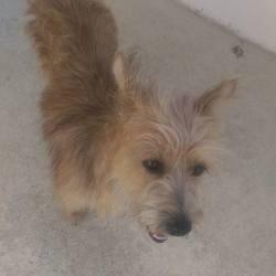 Found dog on 21 Aug 2015 in Clogherboy Navan. found...2yr old Terrier x...found in Clogherboy Navan...ref 369 .contact Meath pound on 087 0676766..