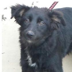 Found dog on 25 Nov 2015 in Corkagh Park , Clondalkin. Found, now in the dublin dog pound.. Date Found: Monday, November 23, 2015 Location Found: Corkagh Park , Clondalkin
