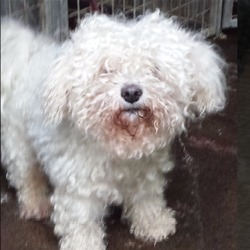 Found dog on 21 Dec 2015 in dublin_pound.......... found, now in the dublin dog pound..Ashton Dog Pound