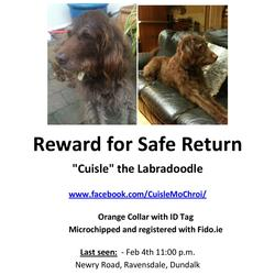 Lost dog on 04 Feb 2016 in Ravensdale, Dundalk Co Louth. 8 yr old Brown Labrador X (Labradoodle) called Cuisle.Went missing on Newry Road in Ravensdale on Thursday Night February 4th. He was wearing his Orange collar and ID. Cuisle is also microchiped and registered with Fido.
