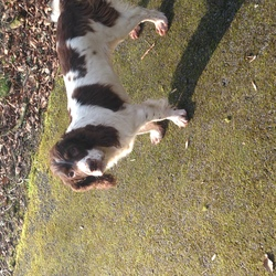 Found dog on 06 Mar 2016 in Newcastle West, Co. Limerick. Lucy Found! Delighted Thanks