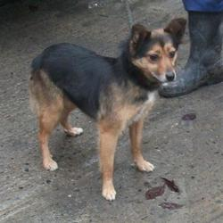 Dog looking for home 02 Feb 2017 in dublin_pound_b. surrendered needs a home, contact dublin dog pound... Surrendered Date: Tuesday, January 31, 2017