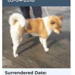 Dog looking for home 05 Apr 2018 in dublin.. surrendered needs a home, contact dublin dog pound...Surrendered Date: 03/04/2018
