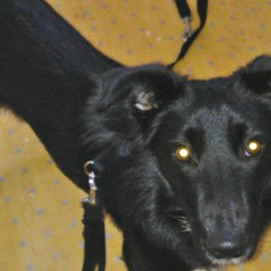 Dog looking for home 05 Jan 2013 in Maynooth. For rehoming, found in Maynooth Contact Maynooth vets on 01 6289467