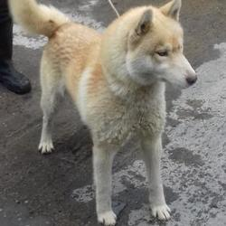 Dog looking for home 06 Apr 2017 in dublin_pound. surrender needs a home contact dublin dog pound.. Surrendered Date: Wednesday, April 5, 2017
