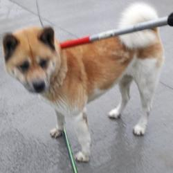 Dog looking for home 06 Dec 2017 in dublin_pound. surrendered contact dublin dog pound... Surrendered Date: