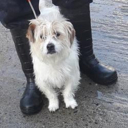 Dog looking for home 14 Feb 2018 in dublin.. surrendered needs a home, contact dublin dog pound.. Surrendered Date:
