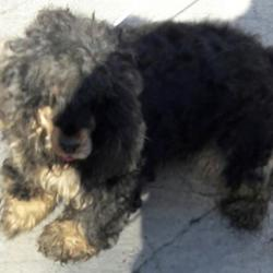 Dog looking for home 16 Mar 2017 in dublin_pound... surrendered needs a home , contact dublin dog pound.. Surrendered Date: Wednesday, March 15, 2017