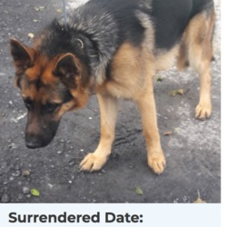 Dog looking for home 20 Apr 2018 in dublin. surrendered needs a home, contact dublin dog pound...Surrendered Date: 27/03/2018