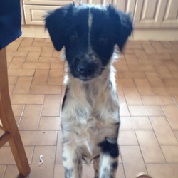 Dog looking for home 23 Nov 2013 in Sligo. 2 collie terrier pups need a new home. Very loving and affectionate, very friendly towards children also. 8 months old, dog licences available.