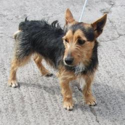 Dog looking for home 24 Apr 2016 in dublin_pound..////. SURRENDERED NEEDS A HOME ASAP, CONTACT DUBLIN DOG POUND.. Surrendered Date: Thursday, April 21, 2016