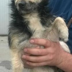Dog looking for home 24 May 2016 in dublin_pound.\. SURRENDERED NEEDS A HOME ASAP. CONTACT DUBLIN DOG POUND... Surrendered Date: