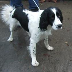 Dog looking for home 24 Nov 2016 in dublin_pound..aa. surrendered needs a home asap , contact dublin dog pound... Surrendered Date: Thursday, November 24, 2016