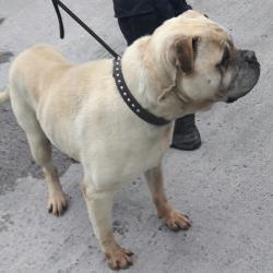 Dog looking for home 25 Apr 2017 in dublin_pound. surrendered, needs a home , contact the dublin dog pound... Surrendered Date: