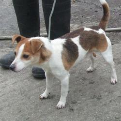 Dog looking for home 26 Feb 2016 in dublin dog pound.. SURRENDERED. NEEDS A HOME ASAP..now in the dublin dog pound... Surrendered Date: