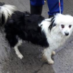 Dog looking for home 26 Jan 2018 in dublin_pound. surrendered needs a home, contact dublin dog pound... Surrendered Date: Thursday, January 25, 2018