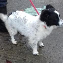 Dog looking for home 28 Nov 2017 in dublin. surrendered needs a home contact dublin dog pound... Surrendered Date: