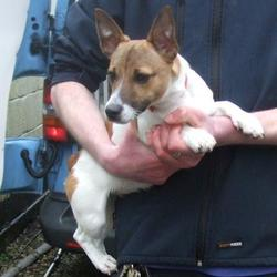 Found dog on 01 Apr 2015 in  Tallaght , Millbrook Lawns. found jrt, now in the dublin dog pound. Date Found: Monday, March 30, 2015 Location Found: Tallaght , Millbrook Lawns