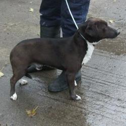 Found dog on 01 Apr 2015 in Tymon Park , Tallaght. found lab x, now in the dublin dog pound... Date Found: Tuesday, March 31, 2015 Location Found: Tymon Park , Tallaght