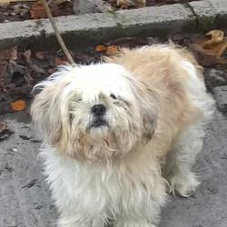 Found dog on 01 Dec 2016 in Cherrywood Est , Clondalkin. found, now in the dublin dog pound... Date Found: