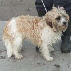 Found dog on 01 Dec 2016 in Whitehall Road , Tenerure. found, now in the dublin dog pound... Date Found: