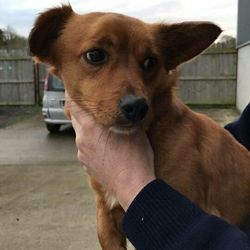 Found dog on 01 Dec 2017 in Blackwater Estate Navan. found..1yr old Terrier x ref 351...found Blackwater Estate Navan....contact Meath pound on 087 0676766...thanks