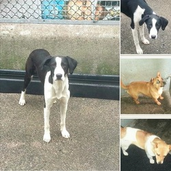 Found dog on 01 Jun 2014 in mullingar. all these dogs are in mullingar dog pound..