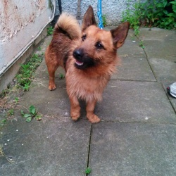 Found dog on 01 Jun 2014 in St Catherine's Park Lucan. FOUND 01/06/14 St Catherine's Park, Lucan. Male, neutered, collar but no tags or microchip. Terrier cross, light brown and black, about 3 years old. Proof of ownership required. Call 0879077460
