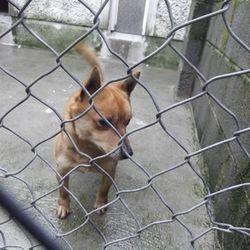Found dog on 01 Jun 2014 in wicklow. found dog jan 2013