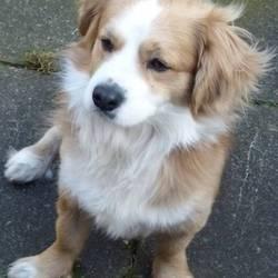 Found dog on 01 Mar 2013 in Rathfarnham. Light Tan, White Collar. Boden Park area. 0872526526