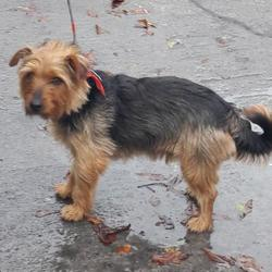 Reunited dog 01 Nov 2017 in Kingswood , Tallaght... UPDATE OWNER FOUND...found, now in the dublin dog pound... Date Found: