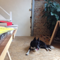 Found dog on 01 Sep 2014 in Temple Bar. black and white collie found temple bar area dublin 2. Contact 0871208636