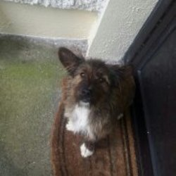 Found dog on 02 Aug 2016 in dunmore / clonbern. Terrier cross, female less 1 year old found Dunmore/Clonbern area.