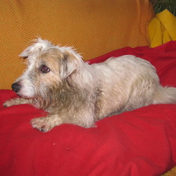 Found dog on 02 Aug 2016 in Kilcolgan, Galway. pretty mainly white terrier, female, red collar
