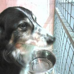 Found dog on 02 Dec 2015 in Kilskyre Kells. found.....Collie X. ...Kilskyre Kells...ref 525...contact Meath pound on 087 0676766...thanks...