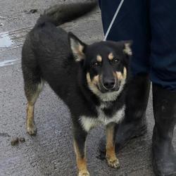 Found dog on 02 Feb 2017 in Castle Raida Est , Lucan. found, now in the dublin dog pound.. Date Found: Wednesday, February 1, 2017 Location Found: Castle Raida Est , Lucan