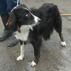 Found dog on 02 Feb 2017 in Water Works , Bohernabreena. found, now in the dublin dog pound... Date Found: Wednesday, February 1, 2017 Location Found: Water Works , Bohernabreena