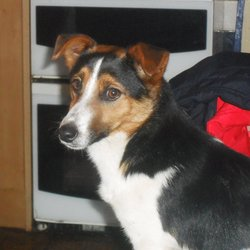 Found dog on 02 Jan 2012 in Fordstown,navan,co.meath.. Male terrier/jack russell mix.Found 02-01-2012 in Fordstown,navan,co.meath area.He is not neutered or microchipped!He is aged roughly 1 1/2 or 2years old.His tail has been docked and he was found with no collar.Very friendly little dog.