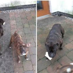 Found dog on 02 Jan 2016 in Kinnegad. found...Found in Kinnegad