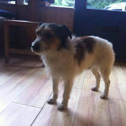Found dog on 02 Jul 2014 in slane. This lovely guy was found on the Slane to Collon road today. Male wearing a grey and red collar. Finder can be contacted on 0857360071 ref to https://www.facebook.com/photo.php?fbid=910564882303939&set=a.475537025806729.128467.473505276009904&type=1&theater