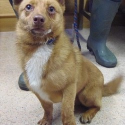 Found dog on 02 Mar 2015 in kells. This boy was brought picked up in Moynalty in Kells Co Meath & brought to Carrick Dog Shelter Lisdoonan, Carrickmacross Carrickmacross Co Monaghan......please share to try get him home...or ring Meath pound if you have any info...thanks..  Dog Ref : 126 Sex : Male Description : Terrier Status : Stray Found : Moynalty Date In : 28/2/15