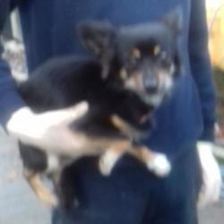 Found dog on 02 Nov 2017 in Found: Killinarden Estate , Tallaght. found, now in the dublin dog pound... Date Found: Wednesday, November 1, 2017 Location Found: Killinarden Estate , Tallaght