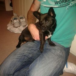 Found dog on 02 Sep 2014 in Sandyford. Black puppy found in Sandyford on 02Sep. Please contact 0851433158 if you are the owner.
